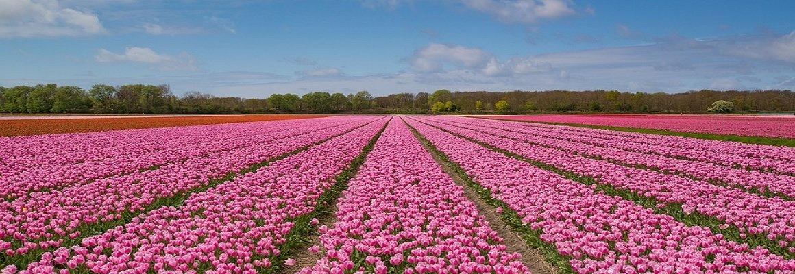 nederland header.jpg