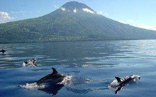 walvissen en dolfijnen op pico 320x200px.jpg