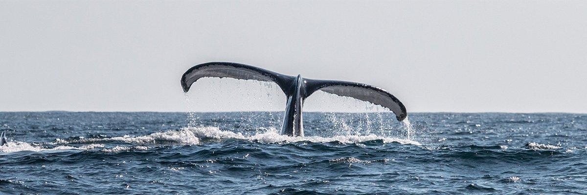 mozambique-ponta-do-ouro-walvis-ramon-lucas-photography-suid-afrika-reise.jpg