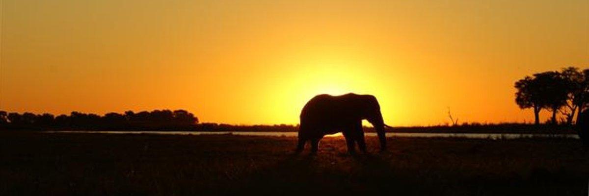 botswana-choby-olifant-zonsondergang-suid-afrika-reise.jpg