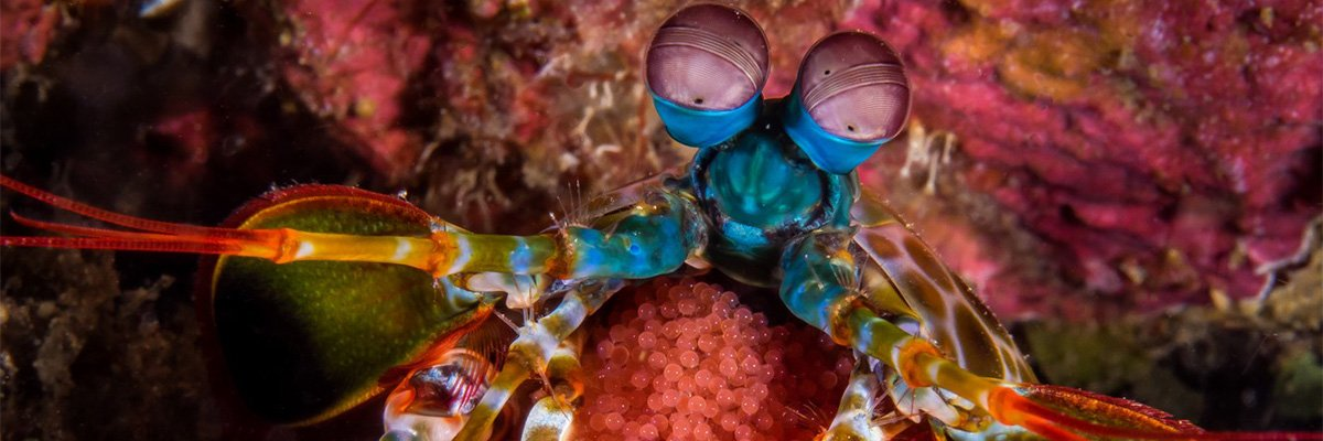 dive-and-travel-banner-foto-3.jpg