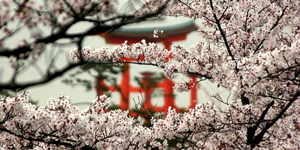 iki-travels-japan.jpg