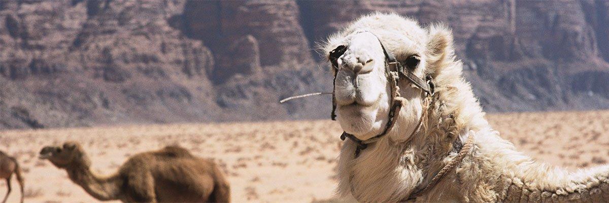 banner-simi-reizen-single-reis-jordanie copy.jpg