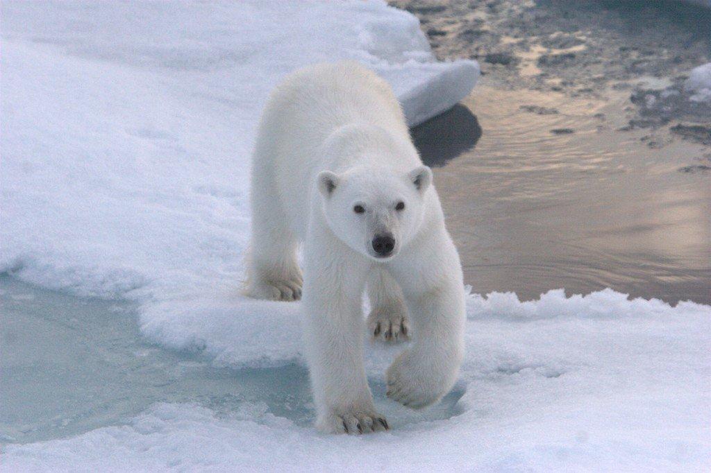 Spitsbergen aanbod