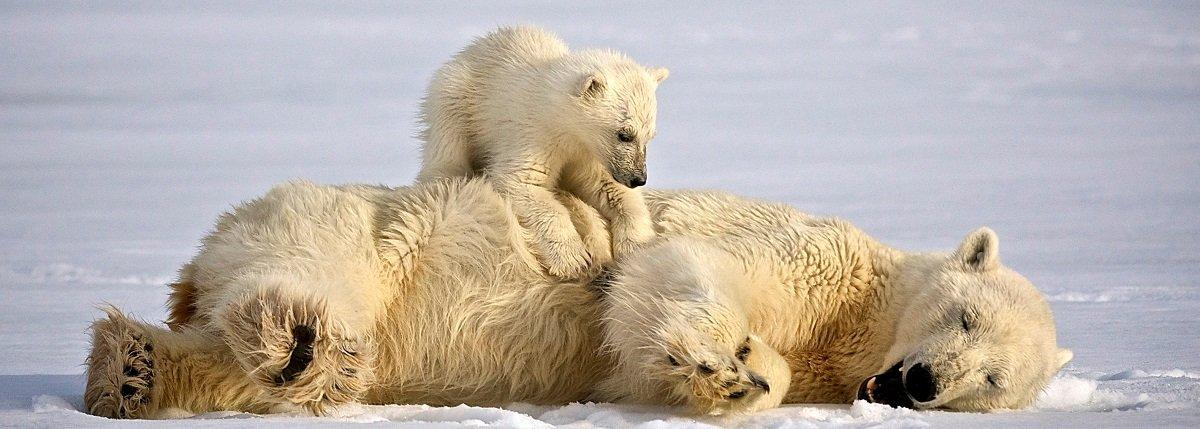 Header Spitsbergen